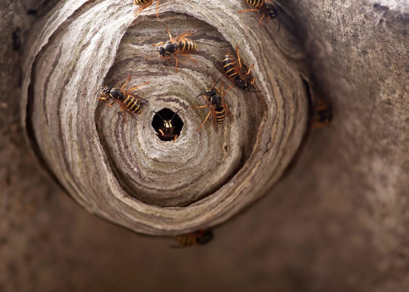 Wespenbestrijding Beverwijk